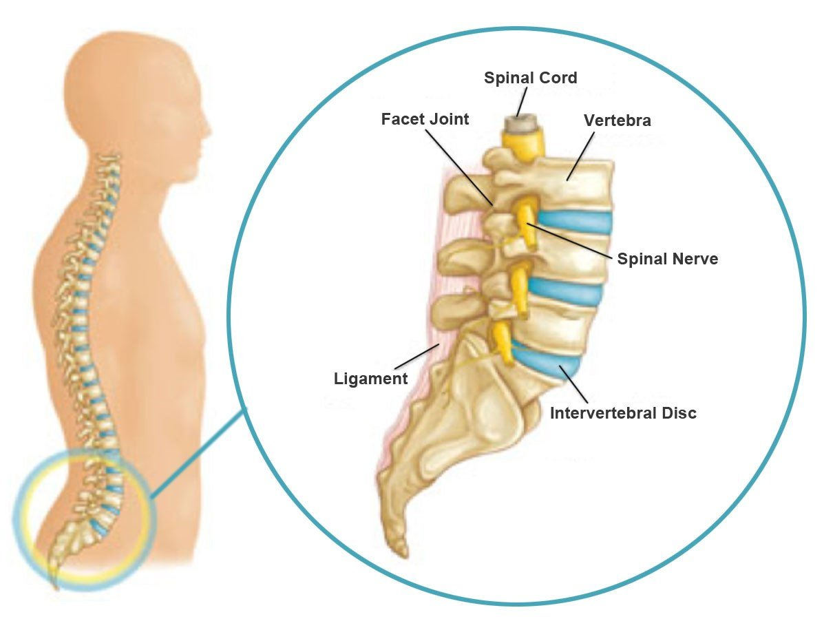 lumbar-spine-close-up-copy