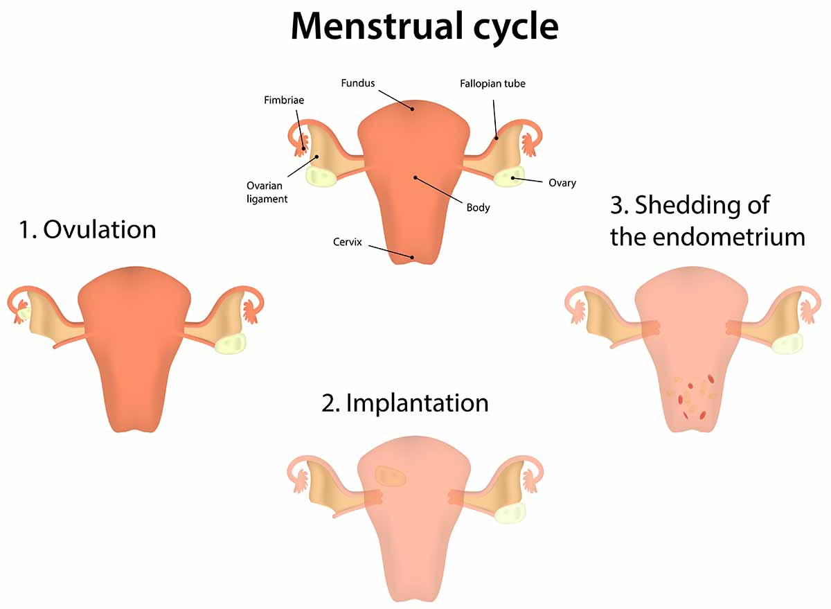 menstrual cycle, eat healthy food, physiotherapy yoga