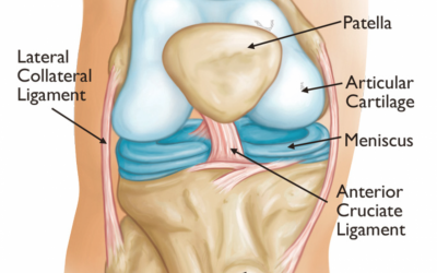 Know your Joints- Knees, Shoulders and Back